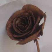פרח ברזל